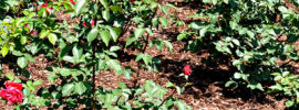 The Best Approach for Mulching