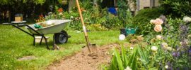 Rose Soil Guide: Preparing Your Soil for Planting Rose Bushes