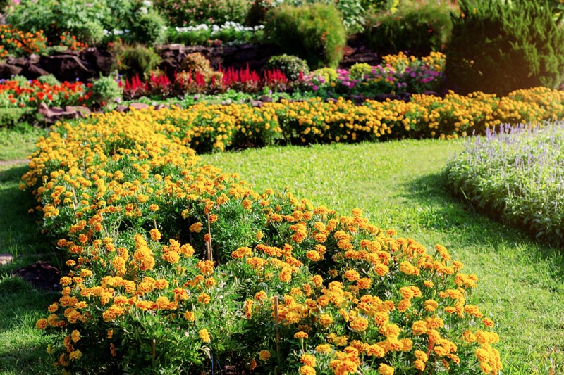 The Buzz on Where To Buy Marigold Seeds In The Philippines