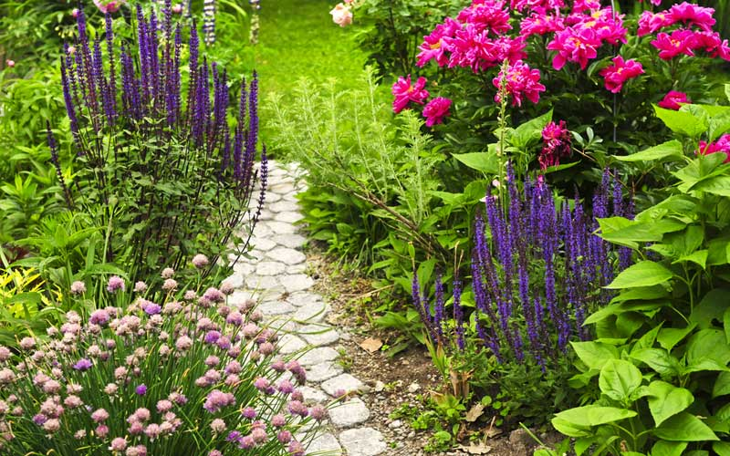 12 Perfect Plants For Walkways Photos Garden Lovers Club