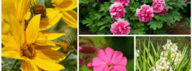 17 Full Sun Perennials for Your Garden (Photos)