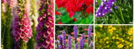 13 Easy Low-Care Perennials