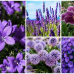 purple perennial flowers