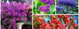 10 Beautiful Drought-Tolerant Shrubs