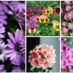spring-blooming annuals
