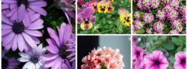 10 Beautiful Spring-Blooming Annuals