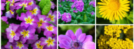 10 Lovely Spring-Blooming Perennials To Brightly Color Your Garden