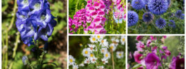 17 Tall-Growing Perennials That Will Add Depth and Beauty To Your Garden
