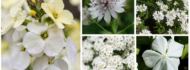 10 Beautiful White Flowering Perennials