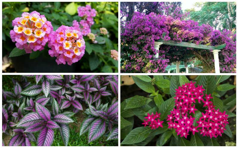 10 Perfect Florida Perennials Garden Lovers Club