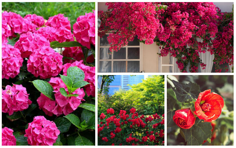 10 Stunning Red Flowering Shrubs Garden Club