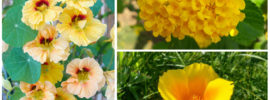 10 Cheerful Yellow Annuals To Grow This Year