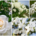 white shrubs