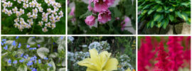 18 Perfect Hardy Perennials