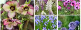 16 Perfect Deer Resistant Perennials