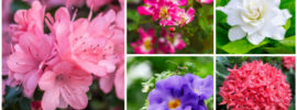 35 Beautiful Florida Shrubs (Photos)