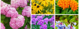 15 Perfect Minnesota Perennials