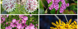 10 Perfect Oregon Perennials