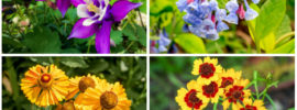 13 Perfect Pennsylvania Perennials