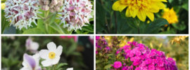 10 Perfect Oklahoma Perennials