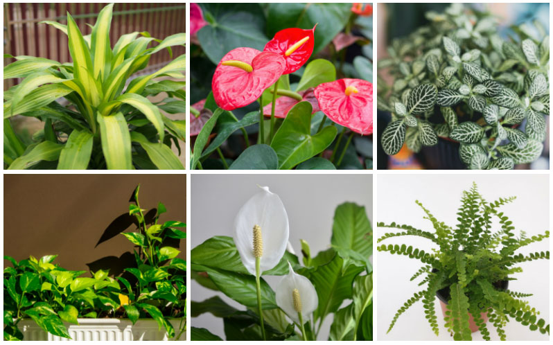 Plants for Clean Air