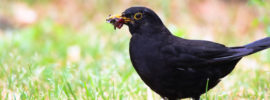 bird eating insect