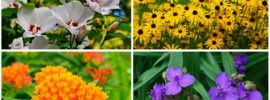 10 Fabulous Virginia Perennials