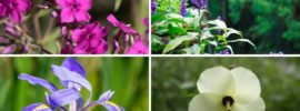 12 Perennials That Grow Well in Louisiana