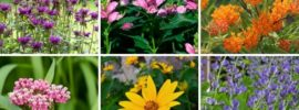 12 Perennials That Grow Well in Ohio