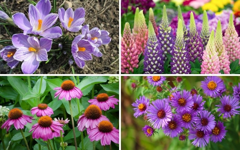 Perennials That Attracts Bees