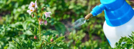 Everything You Need to Know About Organic Pest Control