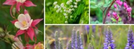 10 New York Perennials You'll LOVE (Photos and Growing Tips)