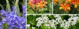 11 Perfect Wyoming Perennials for Your Yard (Plus Care Tips)