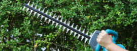 The Seven Best Cordless Hedge Trimmer Models – 2021 Buying Guide