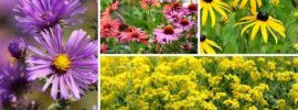 11 Perfect Vermont Perennials (Plus Growing Tips)