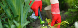 7 Best Weeding Tools to Free Your Garden from Annoying Weeds Easily