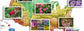 List of Perennial Flowers by State and USDA Zone
