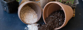 The Best Potting Soil for Indoor Plants – 2021 Reviews
