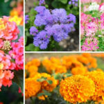 0 Annuals for Flower Boxes in Full Sun