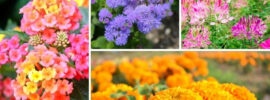 10 Annuals for Flower Boxes in Full Sun