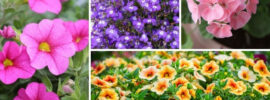 10 Best Annuals for Hanging Baskets