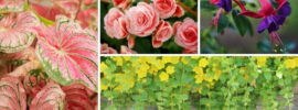Shade Annuals That Grow Well in Containers