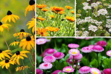 11 Perfect Hardy Annuals (Plus Growing Tips)
