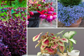 10 Best Annuals for Morning Sun and Afternoon Shade