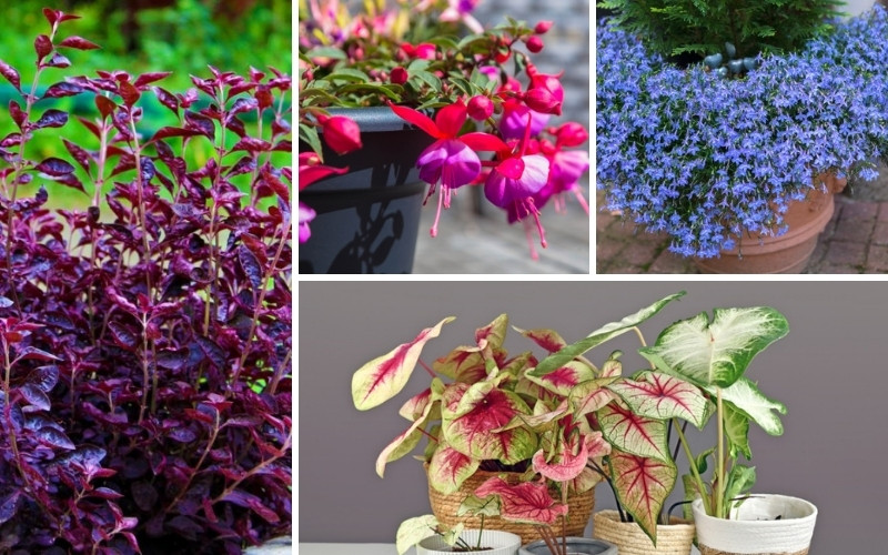 Annuals for Morning Sun and Afternoon Shade