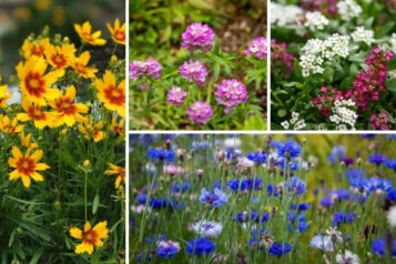 10 Wonderful Self-Sowing Annuals