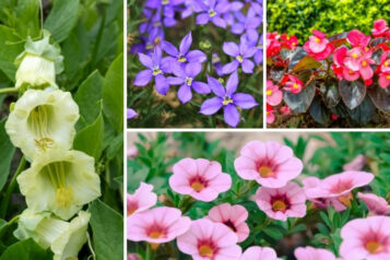 10 Perfect Trailing Annuals You'll LOVE