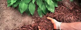 Choosing the Right Mulch for Windy Areas