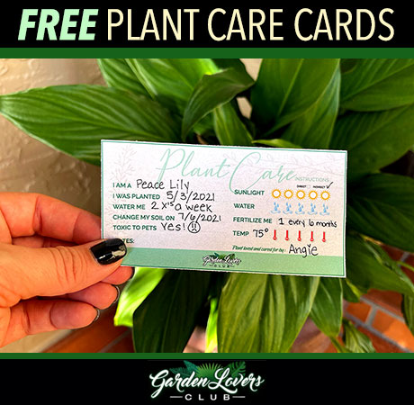 Plant care banner
